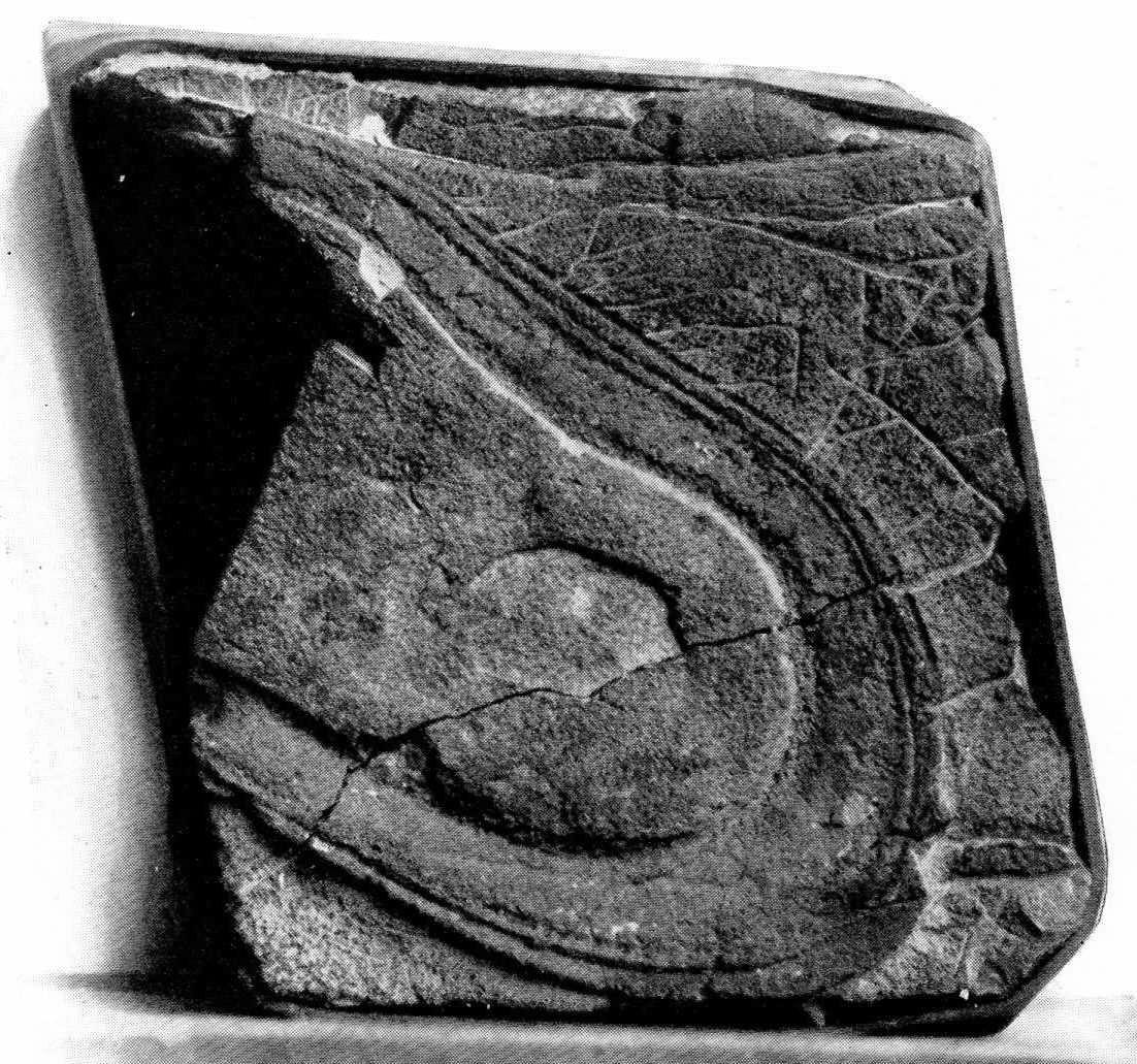 Des empreintes de chaussures vieilles de plusieurs millions d'années Nv-ape1b